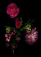 02_Carnations_and_Ivy