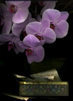 51_Orchid1
