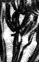 cacti5